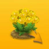 nektaronosniy-kust